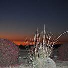 Arizona at it's best . . . by PattyB46
