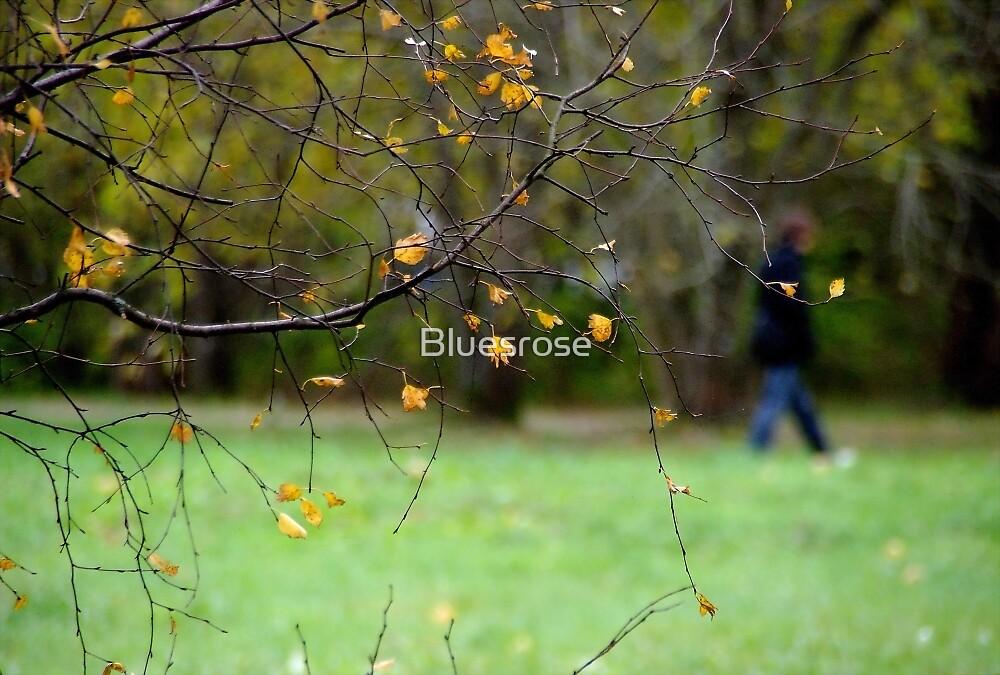 Riverside park by Bluesrose