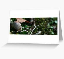 harmony in the bug world Greeting Card