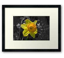 The Yellow of Spring Framed Print