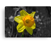 The Yellow of Spring Canvas Print