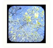 Forsythia TTV Art Print