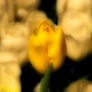 Alone in the Crowd by shutterbug2010