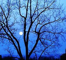 Blue Spring Moon ,  Denver, Colorado by Thomas Stevens