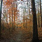 Autumn Path by Jaclyn Hughes