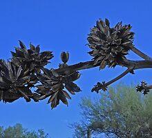 Sideways Century Plant Bloom by John Barthel