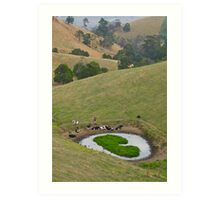 Cows at rest before hill-walking. Gippsland, Victoria. Art Print