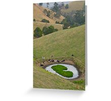 Cows at rest before hill-walking. Gippsland, Victoria. Greeting Card
