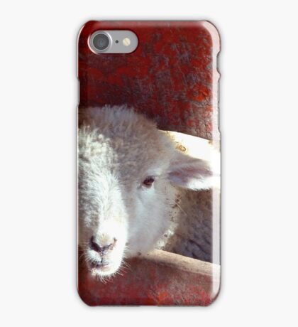 Sheep through Red Picket Fence iPhone Case/Skin