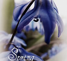 Springs Little Joys  by Nicole DeFord