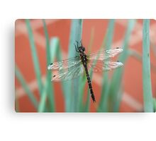 Dragonfly content on Shallots Metal Print