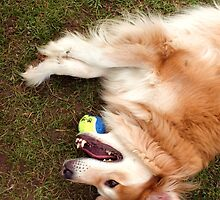 saz laying down with the ball by xxnatbxx
