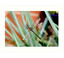 Dragonfly on Shallots 2 Art Print