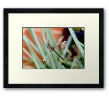 Dragonfly on Shallots 2 Framed Print