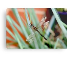 Dragonfly on Shallots 2 Metal Print