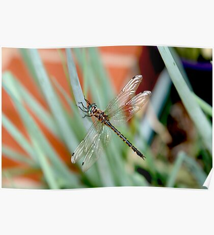 Dragonfly on Shallots 2 Poster