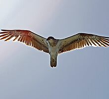 Spread Your Wings and Fly... by Paul Manning