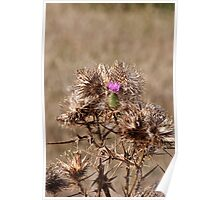 Last Surviving Thistle Flower Poster