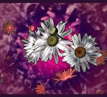 Daisy Delight by Elaine Game