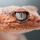 Knob Tailed Gecko by Steve Bullock