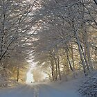 winter forest in sunset by Nordlys