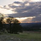 Bradgate Park At Dusk by Mike Topley