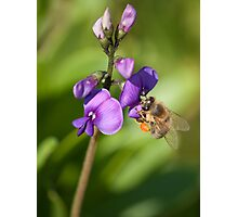 Busy Bee Collecting Pollen Photographic Print