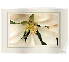 Apple blossom H Poster