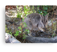 Rock Wallaby & Baby Canvas Print