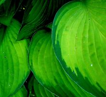 LEAF PATTERNS - HOSTA  ^ by ctheworld