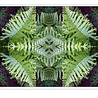 Fern Pattern by Paul Barrington