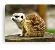 Meerkat #1 Canvas Print