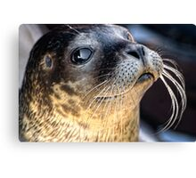 Check Out My Whiskers! Canvas Print