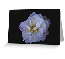 Hint of Pink (Rose) Greeting Card