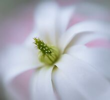 Soft on Magnolias  by Jacky Parker