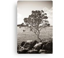 Tree and Rock 2 Canvas Print