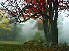 Color Beneath a Blanket of Fog - Brownfield, Maine by T.J. Martin