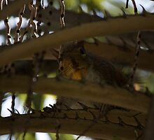 Squirrel in the palma by Roberto Irace
