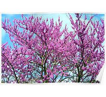 Redbud Trees - Welcome Spring! Poster