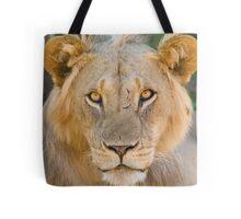 African Lion, Samburu, Kenya Tote Bag