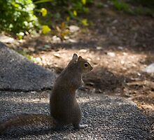Squirrel by Roberto Irace