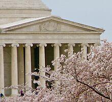 Cherry Blossom #1 by dimpdhab