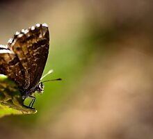 Let The Butter Fly... by tchebytchev
