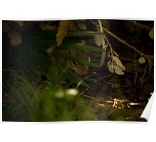 Squirrel in the bush Poster