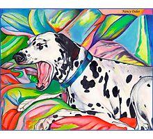 Laughing Dalmatian  Psychedelic Dalmatian Art Photographic Print