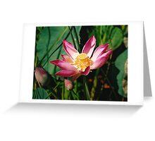 Bali Lotus Greeting Card