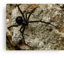 Just a little spider Canvas Print