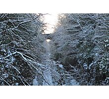 Dreaming of Narnia Photographic Print