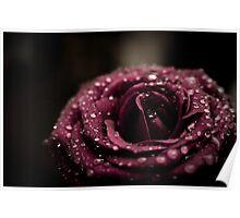 Raindrops On Violet Rose Poster