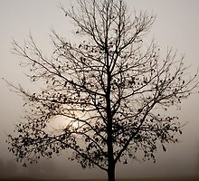 Foggy sunrise in Ann Arbor by Robert Kelch, M.D.